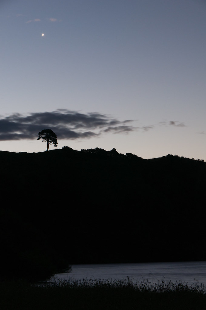 tree of oblivion