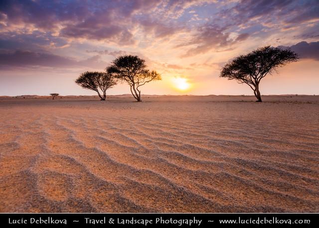 United Arab Emirates - UAE - Ras Al Khaimah - RAK - Sunset in desert with lonely trees