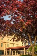 Spring Campus Flowers-19