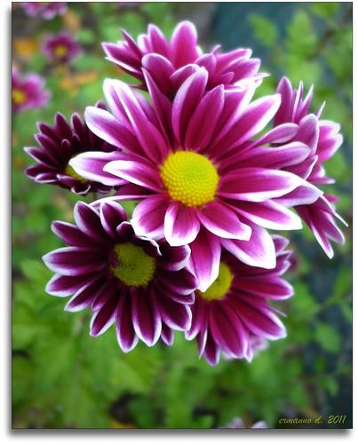 """Фотография: """"bouquet"""" Автор: erman_53fotoclik"""