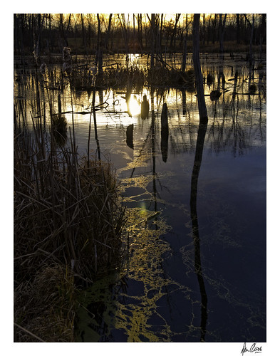 county light art sunrise oakland golden nikon michigan wetland d90
