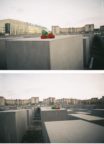 Roses at the Holocaust Memorial, Berlin