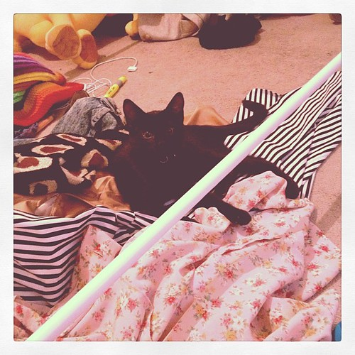 gee thanks for knocking over my clothes and then lying on them.