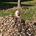 fall_leaves_20111106_21711