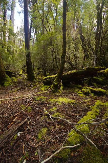 Forest floor. | Flickr - Photo Sharing!
