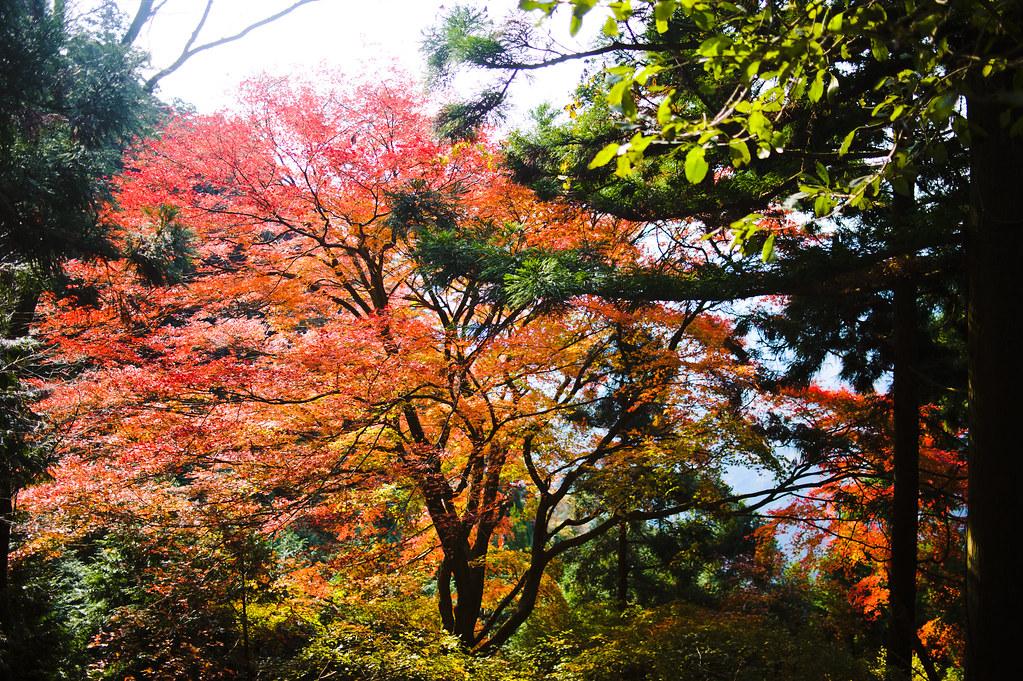 Kyoto Mt. Atago