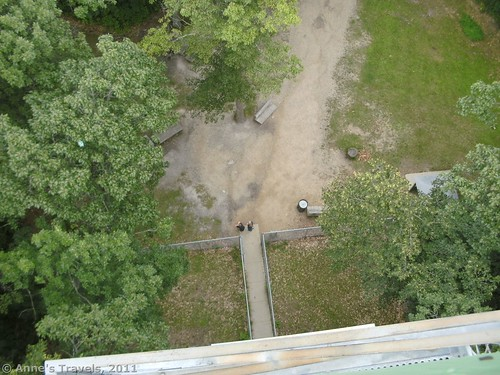 Looking down from the top of the watchtower at Itasca State Park, Minnesota
