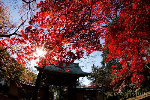 豪徳寺の門