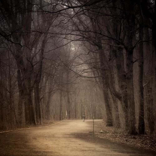 automne montréal arbres montroyal centreville brun brume promeneur paysagedautomne
