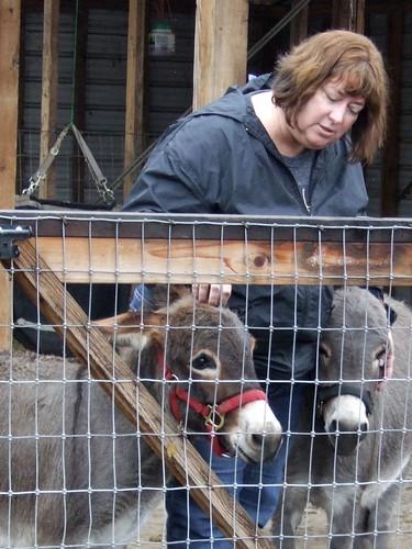 Carla and the donkeys at Haus Bar Farm