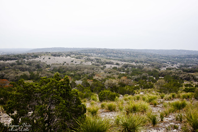 hill country state natural area_12 10 11_0205