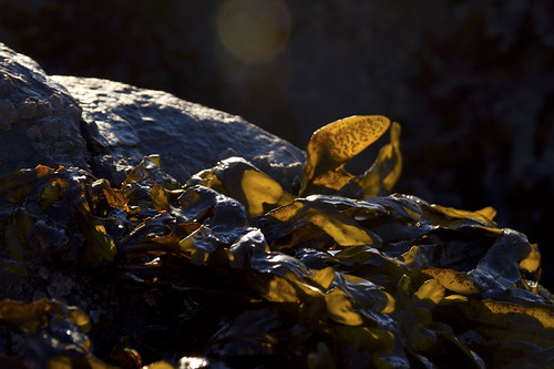 sunlight through rockweed
