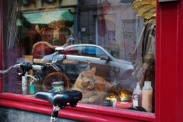 one of three cats we saw in a shop window display. how much?