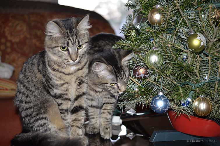 Phoebe and Bertie stare at their first Christmas tree, photo by Elizabeth Ruffing