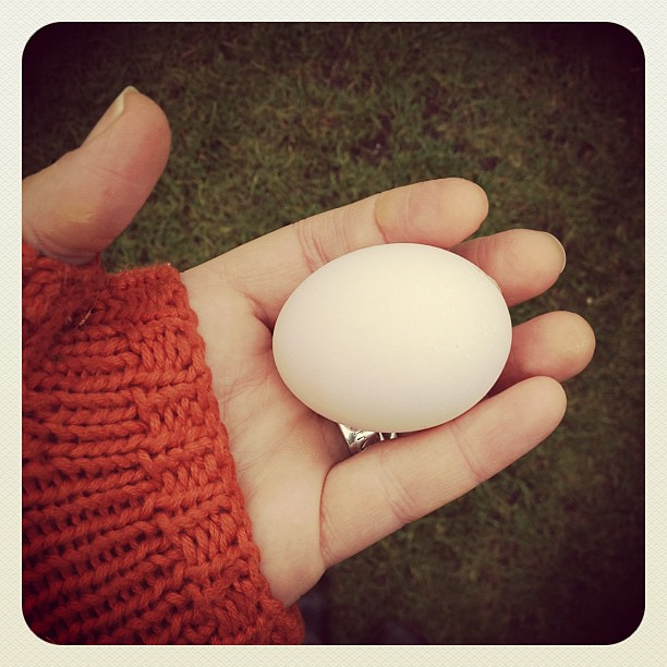 1/1.2012 - a new year to be hatched