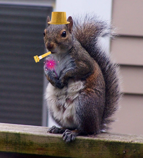 new years squirrel