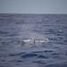 Sperm Whale female & calf by Hugh Madelin