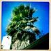 January 7: Hipstamatic Palm Tree