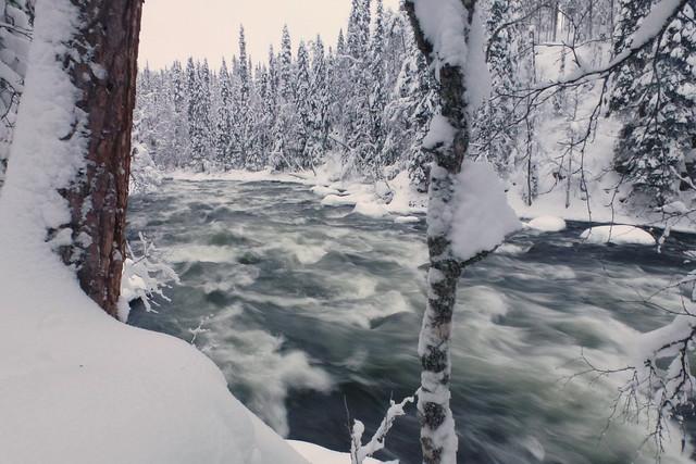 Parques nacionales. Hoy: Oulanka