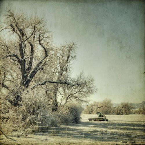 trees winter snow field rural canon vintage fence square colorado grunge combine aged treeline textured farmequipment t1i applesandsisters