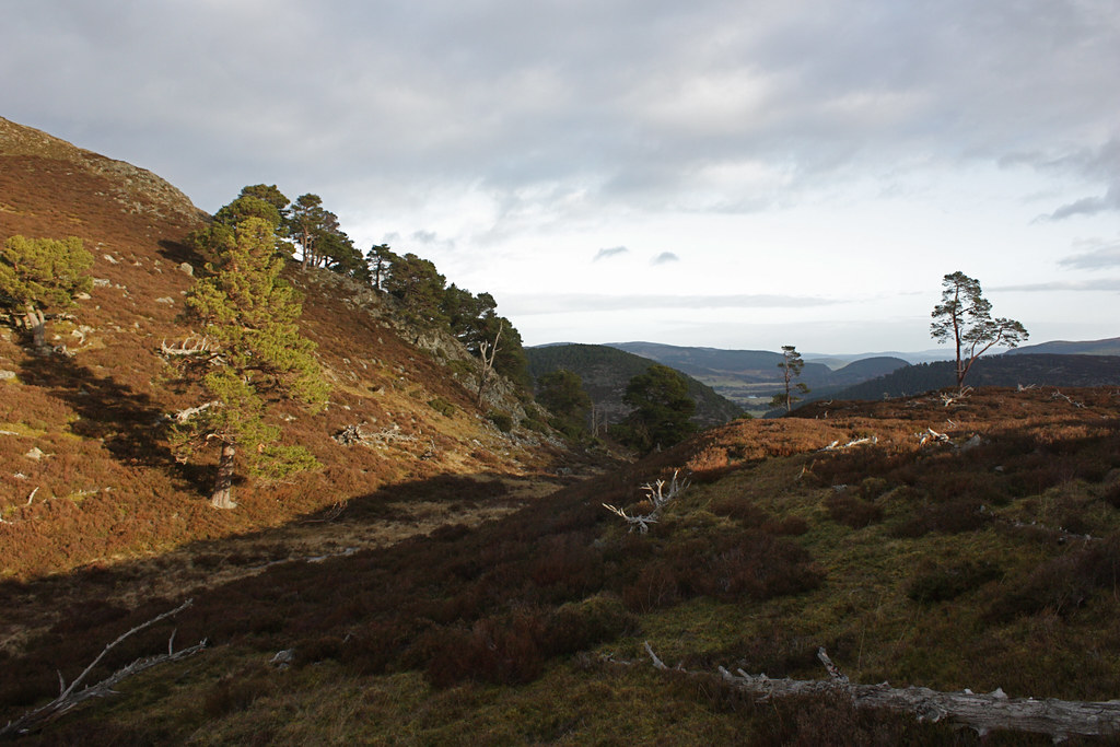 Below Creag nam Ban towards Ballater