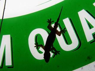 Enlightened gecko (Thailand 2003)