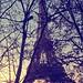 Paris jungle by lemwan