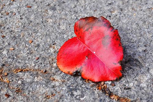 1-12-12 Heart Leaf