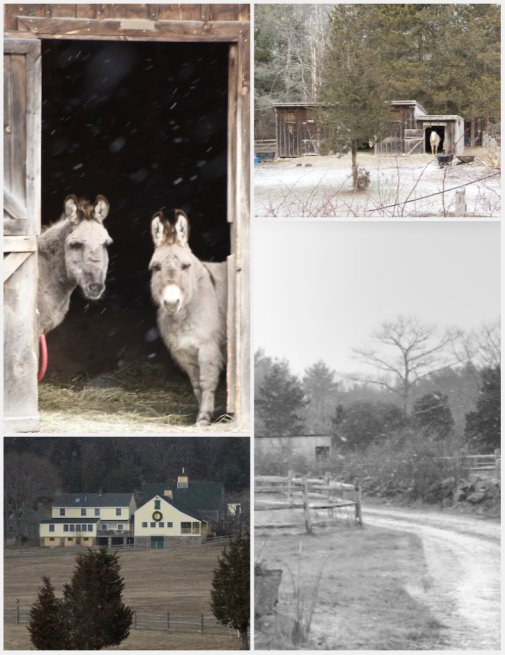 donkey collage