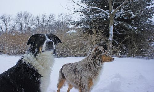 Jan 2012 Puppies by Ted Van Pelt