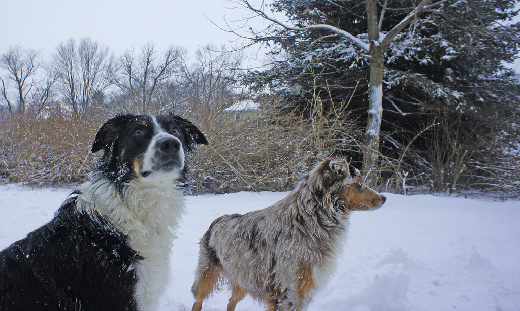 Looking for winter safety tips? Follow these 2 snow covered dogs to find the answers.