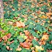 Autumn at Stanford by filip.molcan