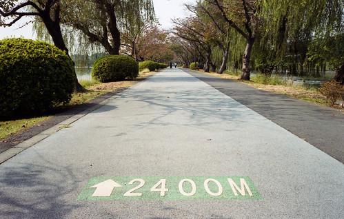千波湖畔 遊歩道