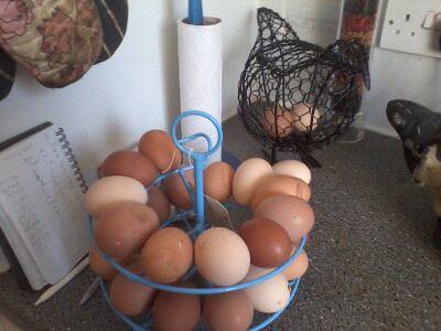 eggs Jan 12