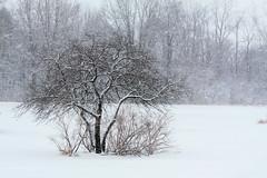 Michigan is Winters Playground
