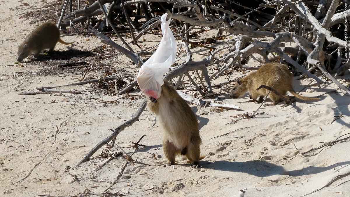 2012.01.12-2012.01.26_dive_safari_[cuba]-diving-021