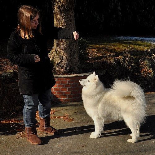 Nos chiens prennent la pose, statique exposition. - Page 2 6822901581_a7864ace4b_z