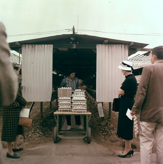 Chicken Ranch, Orange County, 1950s