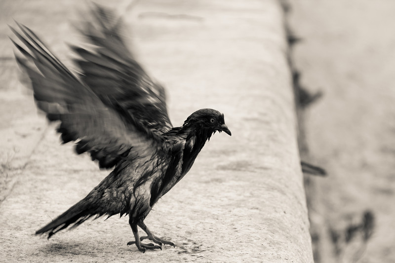 <Landing | Urca, Rio de Janeiro, Brazil | Nature Photography | Animals Photography