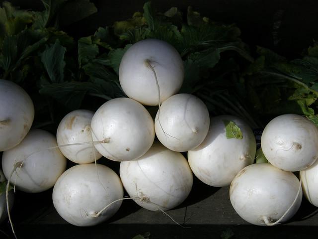 1946 white turnip     ...