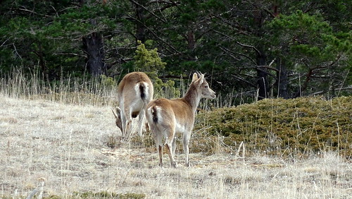 2014-3230 Wild bei Mosquerela