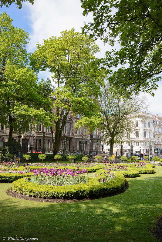 tulips in le square du Petit Sablon