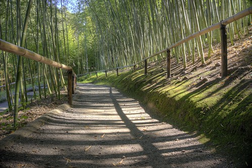 california shadow japanesegarden raw fav50 path saratoga bamboo hdr earthday hakonegardens 3xp photomatix bamboogarden selp1650