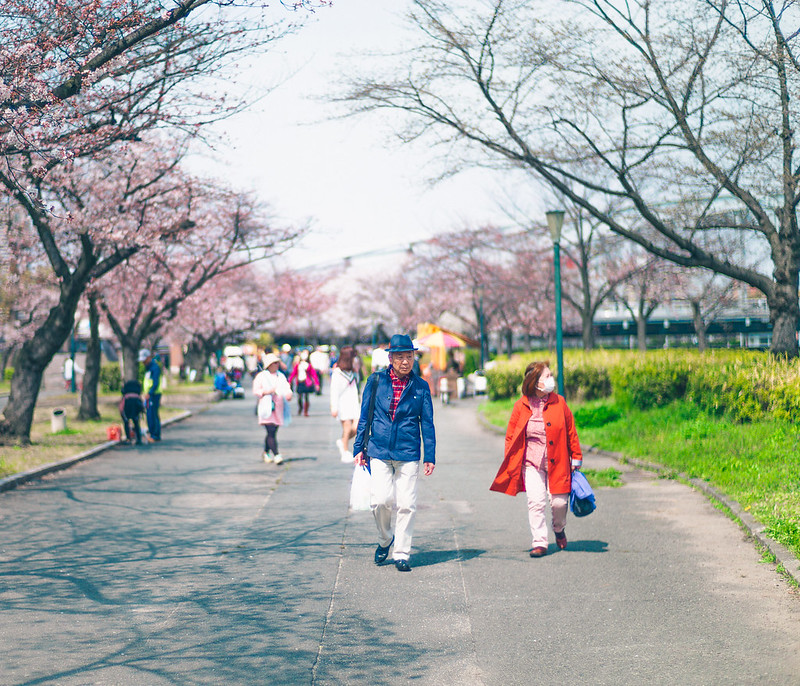 9.Roaming Under The Cherry Blossoms.