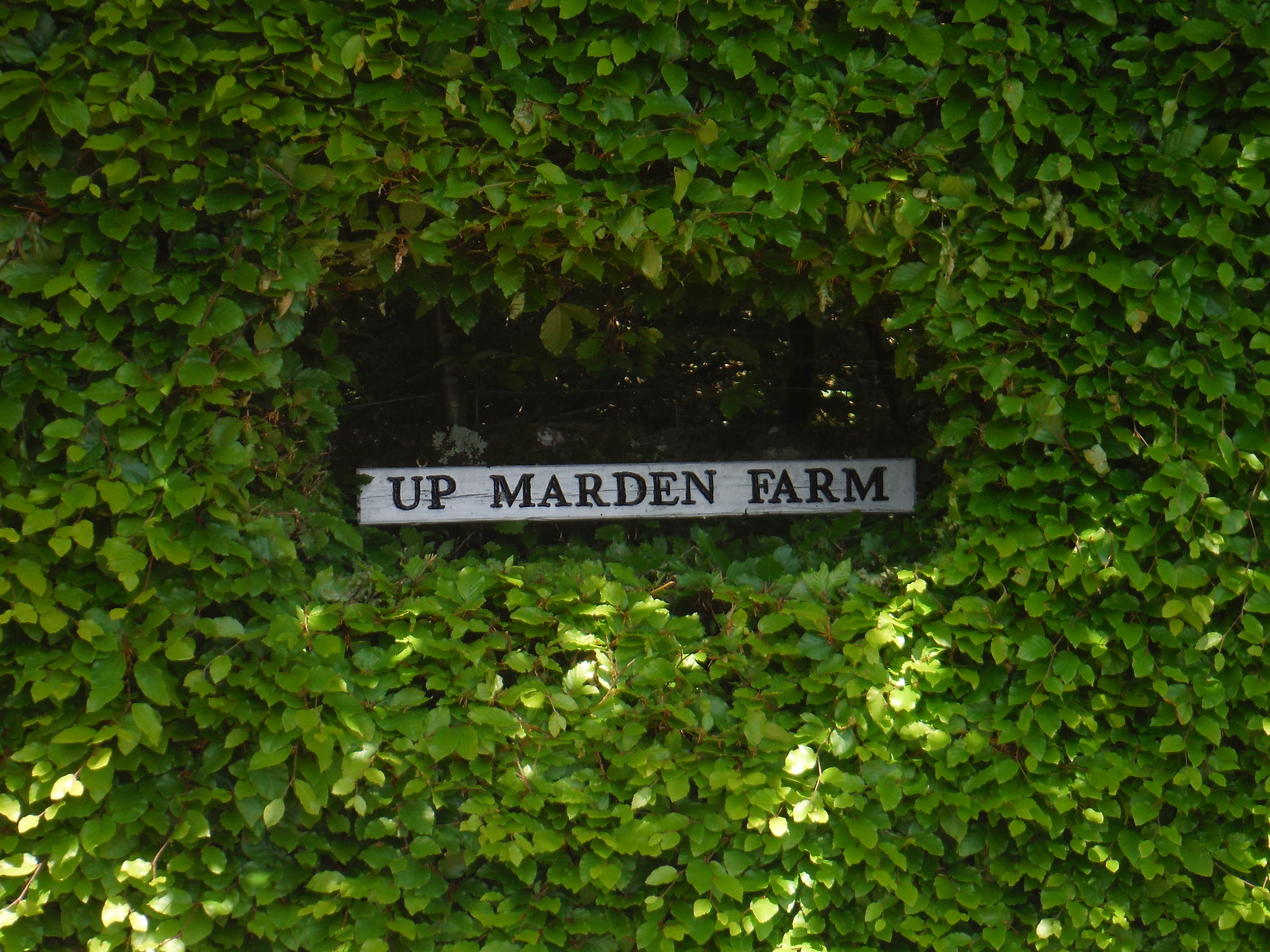 Farm Sign in Hedge SWC Walk Rowlands Castle Circular