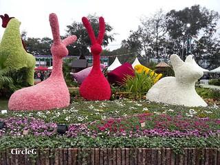 CIRCLEG 遊記 維多利亞公園 銅鑼灣 花展 2016 (28)