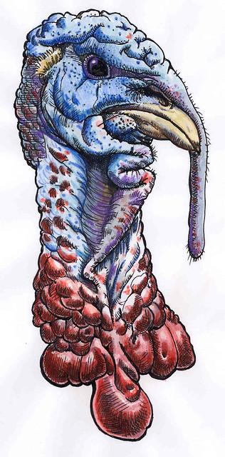 turkeyheadcolor