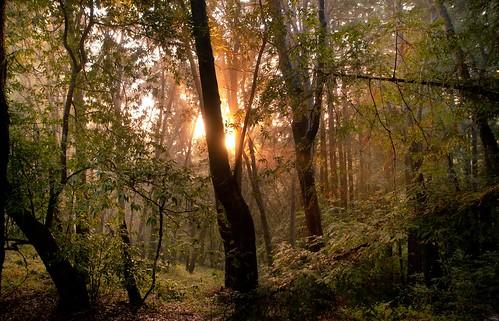 無料写真素材, 自然風景, 森林, 樹木