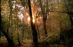 [フリー画像素材] 自然風景, 森林, 樹木 ID:201111292000