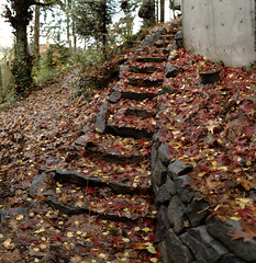 new stone path, with autumn leaves